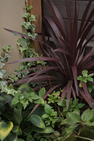 日陰を彩る植物たち♪