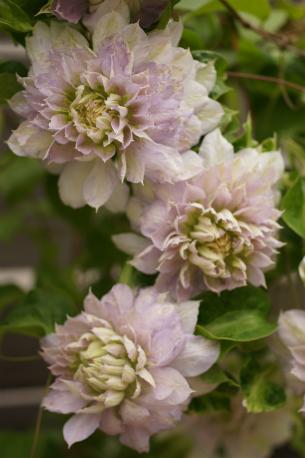 花数が凄くてとっても豪華っ♪