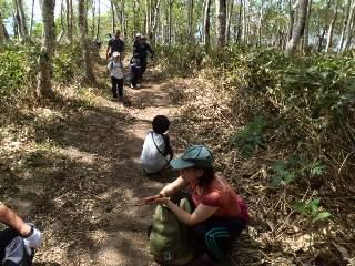 ダケカンバの森を登る