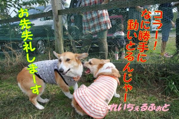 DPP_5944_20141027184144359.jpg