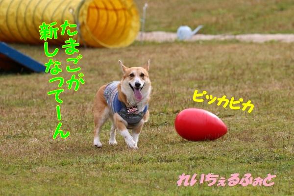 DPP_6130.jpg