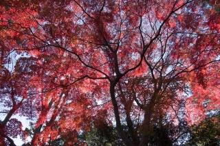 晴れた空に敷かれる赤絨毯