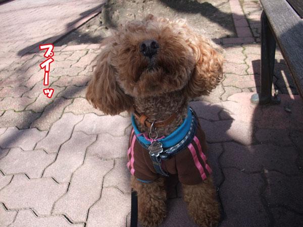 010a_20120321231418.jpg