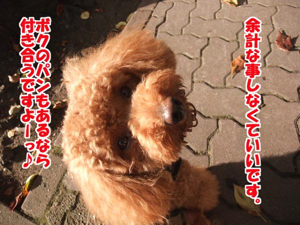 DSCF22940001a.jpg