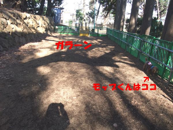 DSCF3083a.jpg