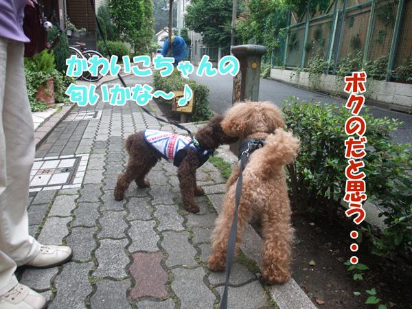 DSCF4109a_20120626134836.jpg