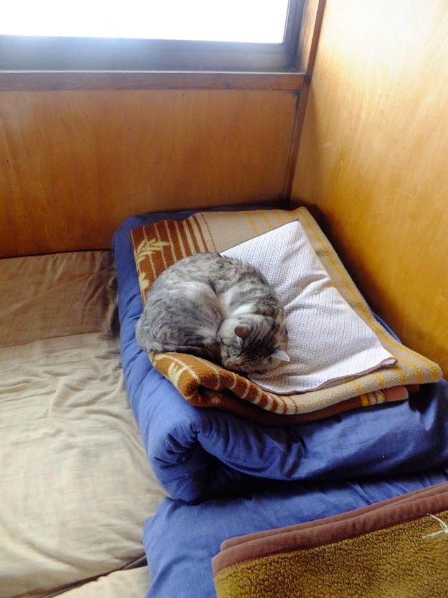 18-尊仏猫