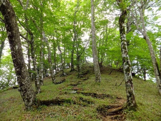 9-円山木下