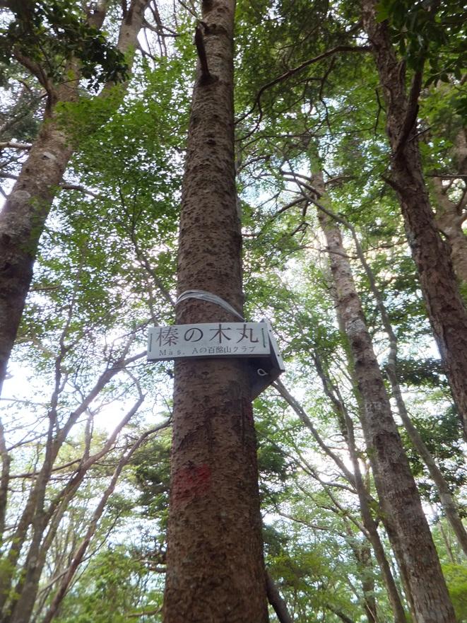 9-榛の木