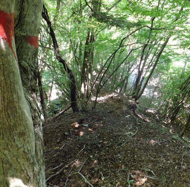 1-榛の木取付き