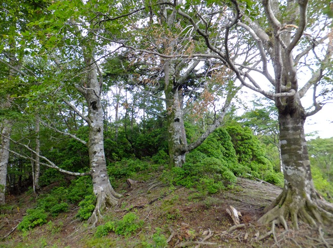 6-上部 榛の木