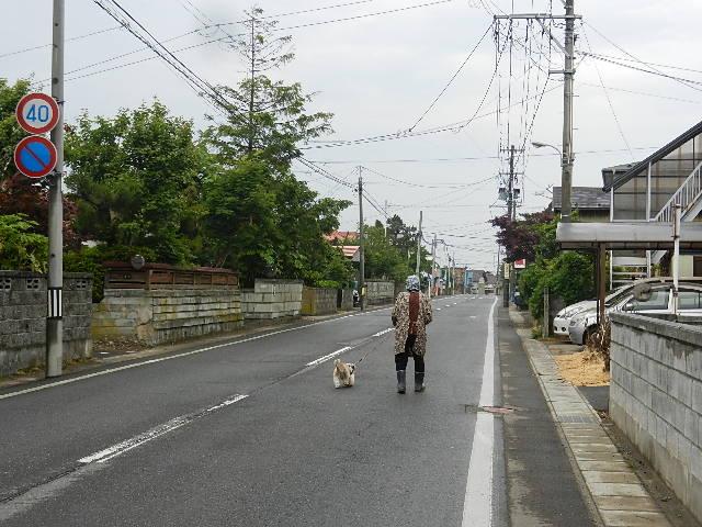 ゴルフ  南秋田カントリー 090
