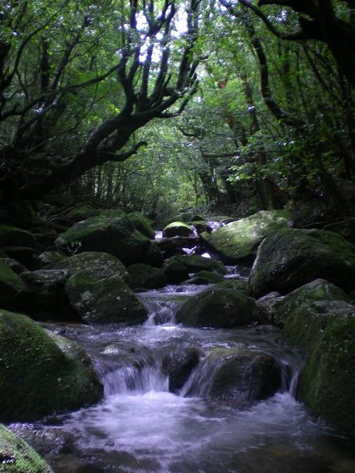 白谷雲水峡・2