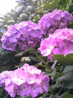 kichijouji1106197.jpg