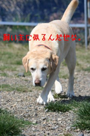 2010_0330_134530-068euqwu.jpg