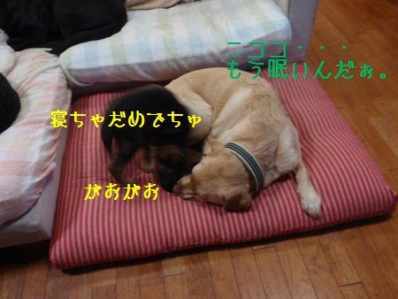 2010_0617_145129-P6170727bcbcxbnxgusdusdsss.jpg