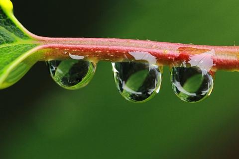 梅雨の雫 2