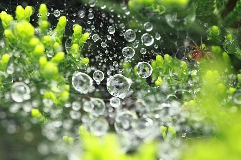 梅雨の雫 3