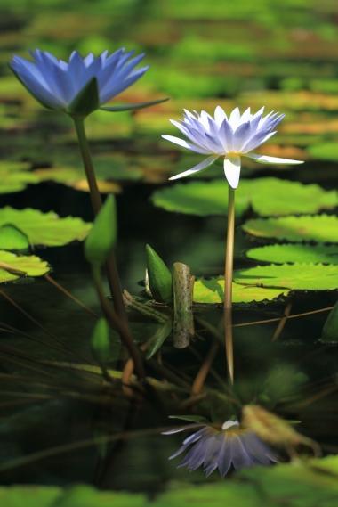 水生植物園23