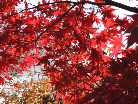 N3494大山崎山荘の紅葉