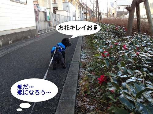 201401192141161e8.jpg