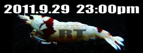 RT11.jpg