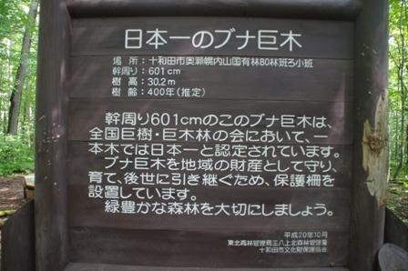 IMGP5793-0.jpg
