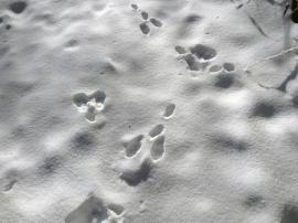 Footmark of Hare