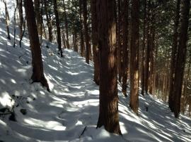 Trail 14