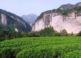 武夷山茶園