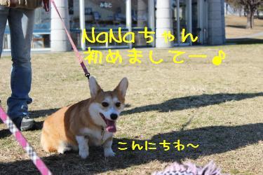 NaNaちゃんキター!