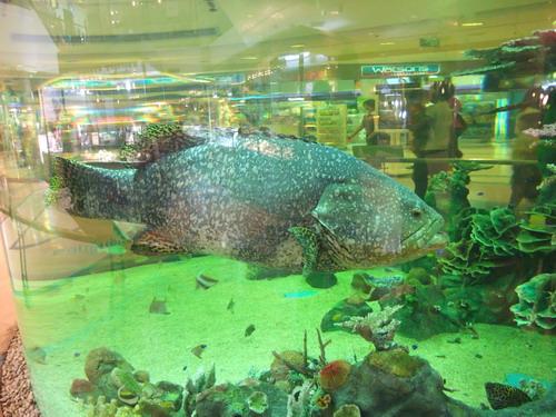 1-AP Fish 002