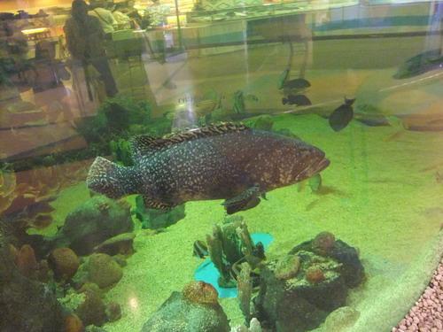 1-AP Fish 003