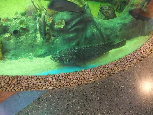 1-AP Fish 004