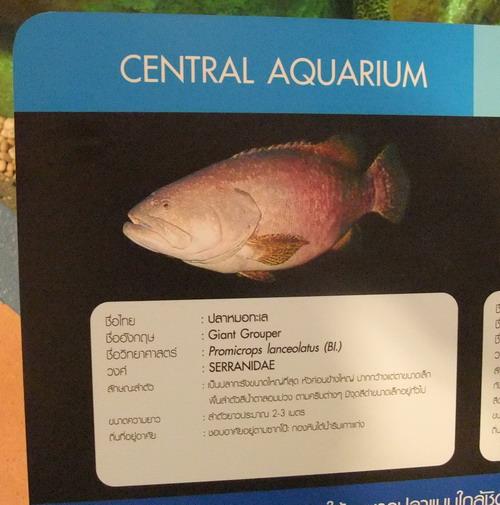 1-AP Fish 005