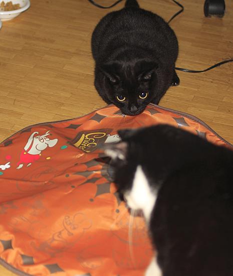 cats_0002.jpg
