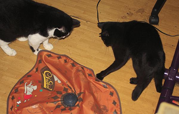 cats_0003.jpg