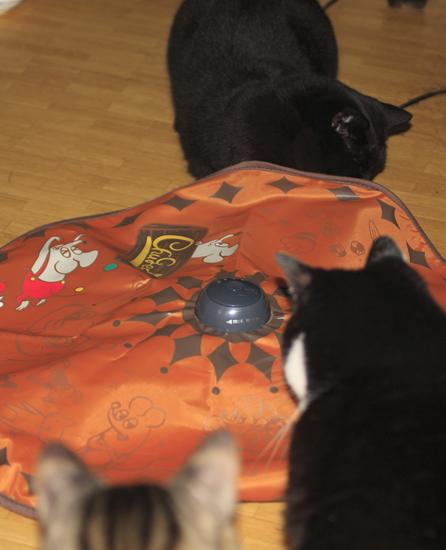 cats_0004.jpg