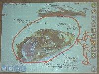 20101116煮干し解剖