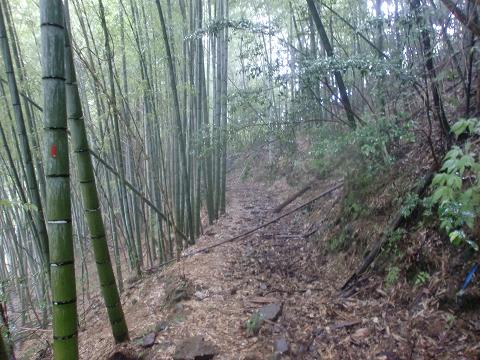大石峠山 (10)