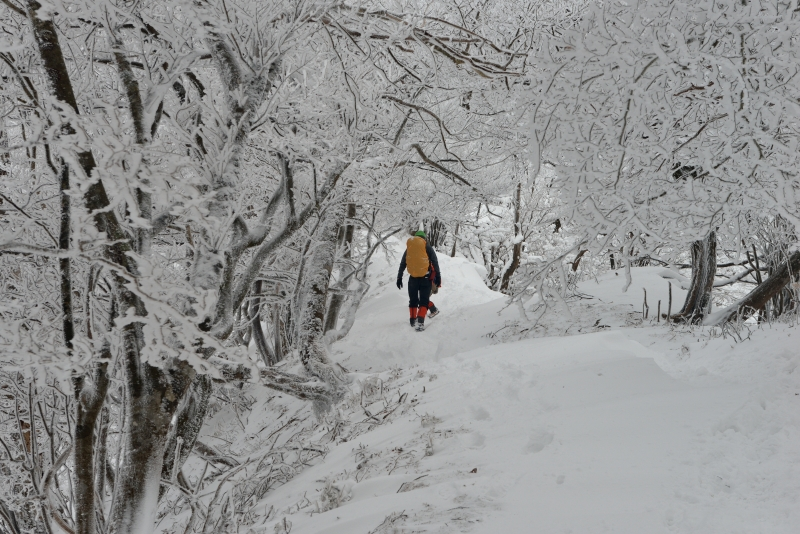 英彦山 (29)