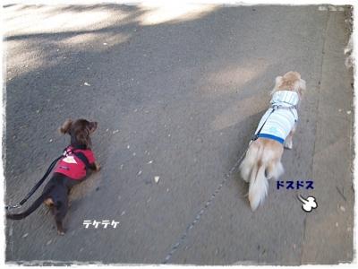 駒沢あ散歩 ⑬