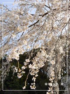 aprilGarden2012-23.jpg