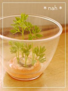 carrot2012-07.jpg
