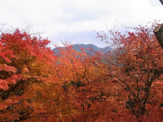20101120笠長谷寺談山神社よろず0598
