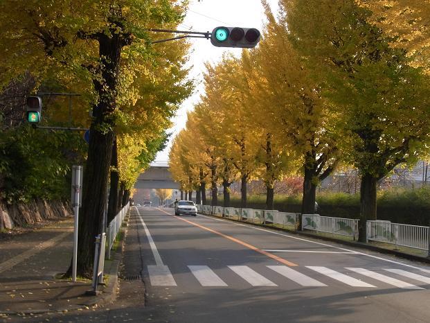 20101120笠長谷寺談山神社よろず0584