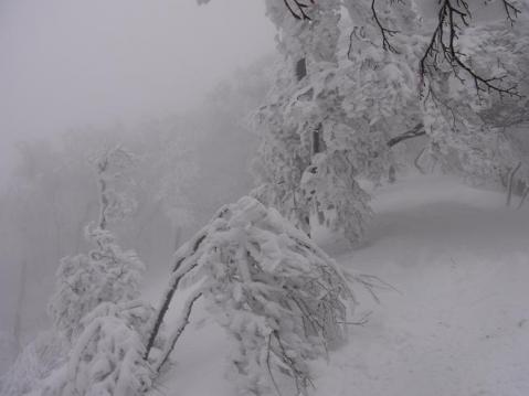 20110212 高見山樹氷1103