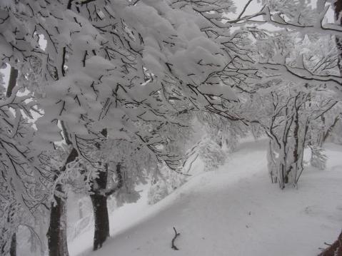 20110212 高見山樹氷1102