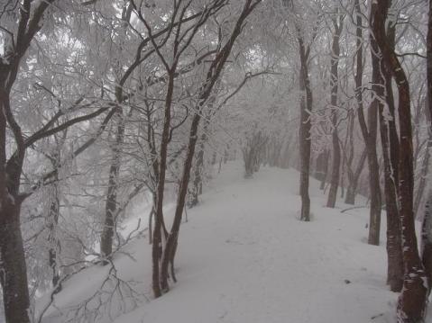 20110212 高見山樹氷1100