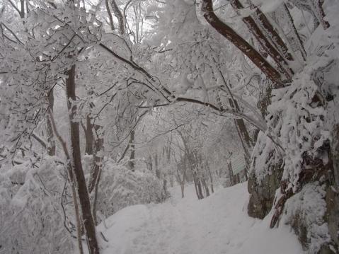 20110212 高見山樹氷1096